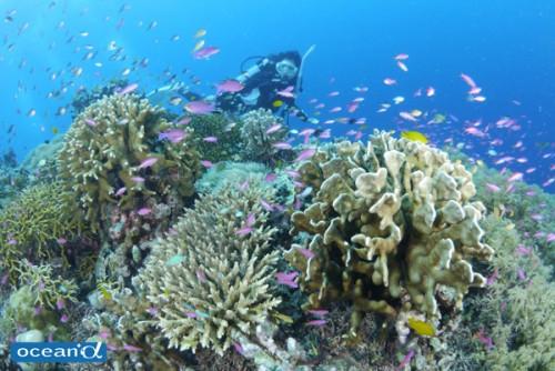 セブ島の魚の群れとダイバー(撮影:越智隆治)