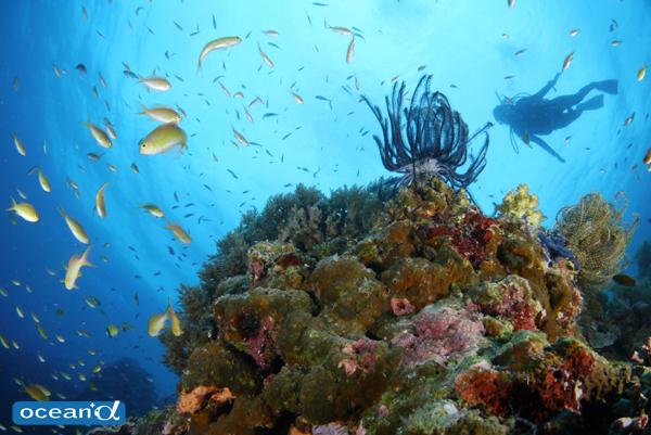 セブ島のサンゴとダイバーのシルエット(撮影:越智隆治)