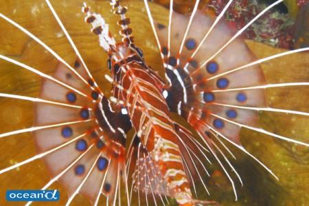 魚の模様に注目し、思いきって切り取った写真