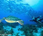 次の記事: 2013年初セブロケはバリカサグ島へ。5月にフォトツアー再び