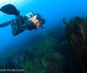 前の記事: 北の海で研ぎ澄まされたプロの技~北海道潜り歩き・函館の海~