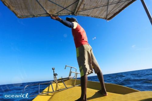 スリランカ、マッコウクジラリサーチ(撮影:越智隆治)