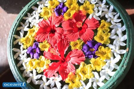 スリランカの花(撮影:越智隆治)