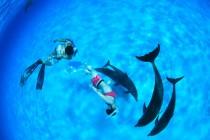 この海には定住性のタイセイヨウマダライルカやバンドウイルカたちが生息している