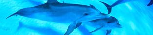 bahamas_dolphin_cruise_314_73px
