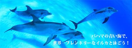 bahamas_dolphin_cruise_top_420px