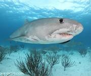 次の記事: 明日から、サメ三昧!バハマのタイガーシャーククルーズへ!