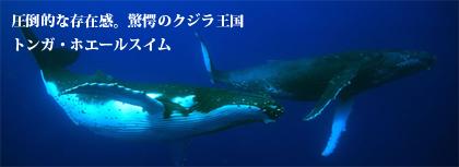 tonga_whaleswim_420px