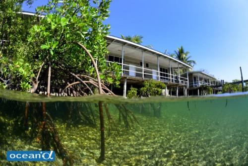 リゾート周りの海にはマングローブが広がり、まったりと潜ることができる
