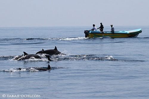 イルカと共存して漁を行なうスリランカの漁業スタイル