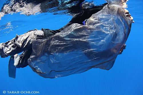 マッコウクジラが潜行した後には、身体からはがれ落ちた体皮が浮遊していた。広げると、こんな大きさになる皮も