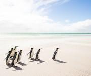 次の記事: 青空の下を歩くフォークランド諸島のキングペンギン~岡田裕介の