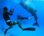 前の記事: 【募集】水中カメラマン・越智隆治と行くセブフォトツアーを20