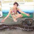 セブ島の大蛇(撮影:越智隆治)