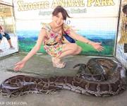 次の記事: ボホール島のでっかい蛇と嬉々として戯れる、変わったモデル・エ