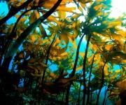 """次の記事: 葉山の海の中に息づく""""森""""!都心から1時間の海を伝える水中写"""