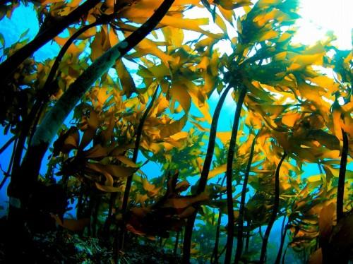 """""""海の森""""には、豊かな生物相を見ることができる (撮影:佐藤輝)"""
