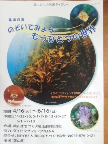 葉山の水中写真展「のぞいてみよう、もうひとつの世界」