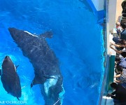 次の記事: 水槽内に入れたのは数年ぶりらしい、鴨川シーワールドのカレンダ