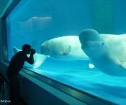 前の記事: 子どもたちが水族館で学んだたくさんのこと