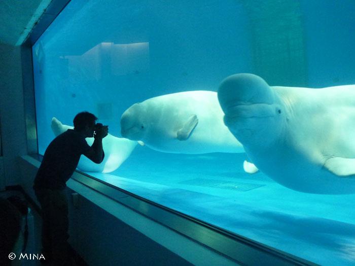 ウザいぐらい魚が好きなダイバーに案内される水族館はこんなに楽しい!