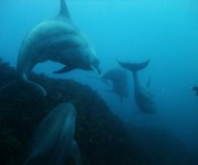 次の記事: 【神子元島】ダイビング中に5頭のイルカに遭遇!