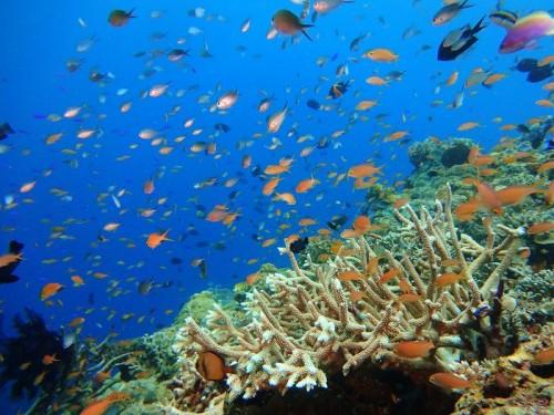 パプアニューギニア、アロタウ