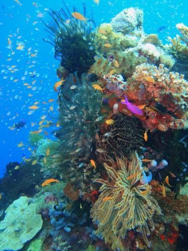 色彩豊かなアロタウの海
