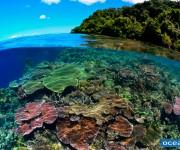 次の記事: 「地球最後の秘境 パプアニューギニア〜精霊の祭りと太古の海〜