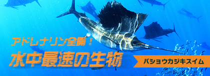 trip-sailfish-420px