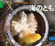 """次の記事: 海の中の""""共生""""をテーマにKindleで水中写真集が誕生「海"""