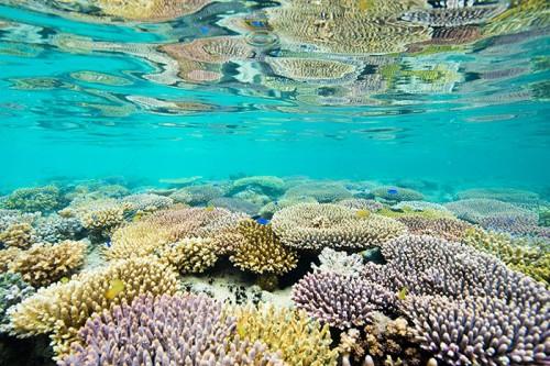 パプアニューギニアのサンゴ礁(撮影:岡田裕介)