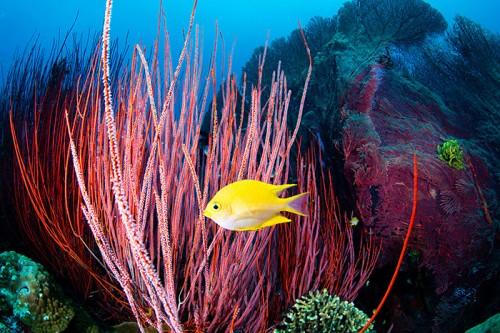 パプアニューギニアのキンベ湾(撮影:岡田裕介)