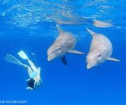 前の記事: ハンドウイルカと泳ぐ毎日 - バハマドルフィンクルーズ201