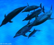 次の記事: いなくなってた北のイルカたちが見つかった!バハマドルフィンク