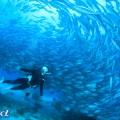 セブの海(撮影:越智隆治)