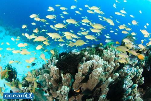 セブ島のダイビング(撮影:越智隆治)