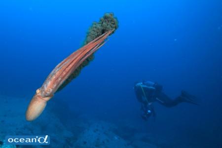 日本海といえばミズダコ。手を広げると、優に人間を包み込んでしまうほど大きさのものも!