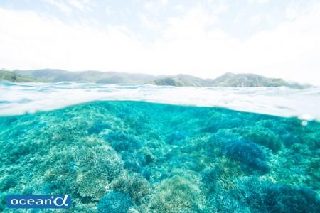 シュノーケリングで撮影したシークレットガーデンのサンゴと陸の原生林。豊かな陸と海の一体感を感じる