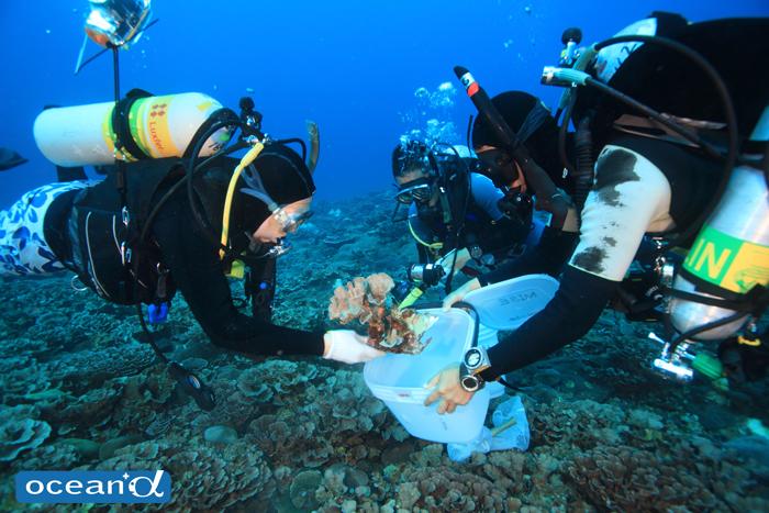発見されたリュウモンサンゴ属のサンゴの標本を採取する、研究チーム「竜宮の海 夏の沖縄、恩納村へ」より
