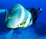 前の記事: 西表島・オガンでずっとついてきたツバメウオ~岡田裕介の海中時