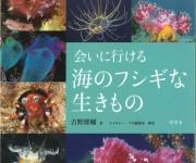 次の記事: 新刊写真集プレゼント!「会いに行ける海のフシギな生きもの」(