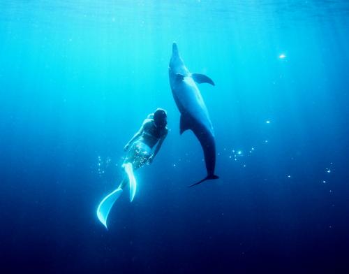 イルカと目を合わせ、ゆっくりと回りながら水面へと泳ぐ (水中モデル:鈴木あやの、撮影:福田克之)