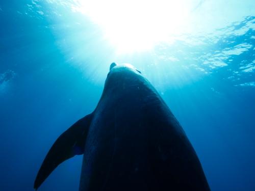 見上げたイルカはこんな風に見えている (撮影:鈴木あやの)
