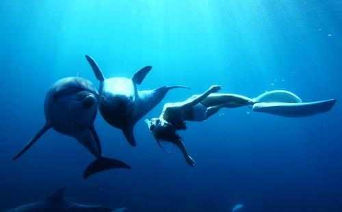 イルカ2頭が上下になり、ぐりぐりと押し合いながらあやのさんの周りを回っている。好奇心旺盛な御蔵島のイルカ達は、野生でありながら、こんな風に寄ってきて一緒に泳いでくれる (水中モデル:鈴木あやの、撮影:福田克之)
