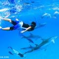 ゲストと一緒にイルカと泳ぐ海友