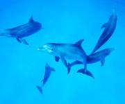前の記事: バハマのイルカと泳いで感じた、自分に足りないもの~岡田裕介の