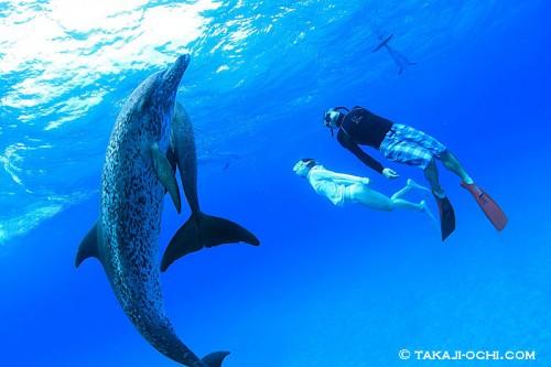 水中では、イルカと二人との写真を撮影