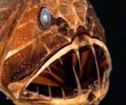 前の記事: 本当に深海にいるみたい!「超・深海展」でドキドキ体験 ~ルコ