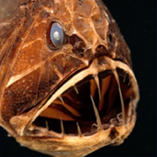 本当に深海にいるみたい!「超・深海展」でドキドキ体験 ~ルコの突撃レポート~